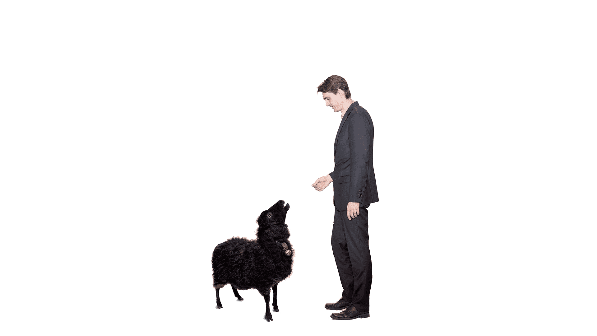Kamloops lawyer Courtney Aubuchon talking to a black sheep about being disenherited