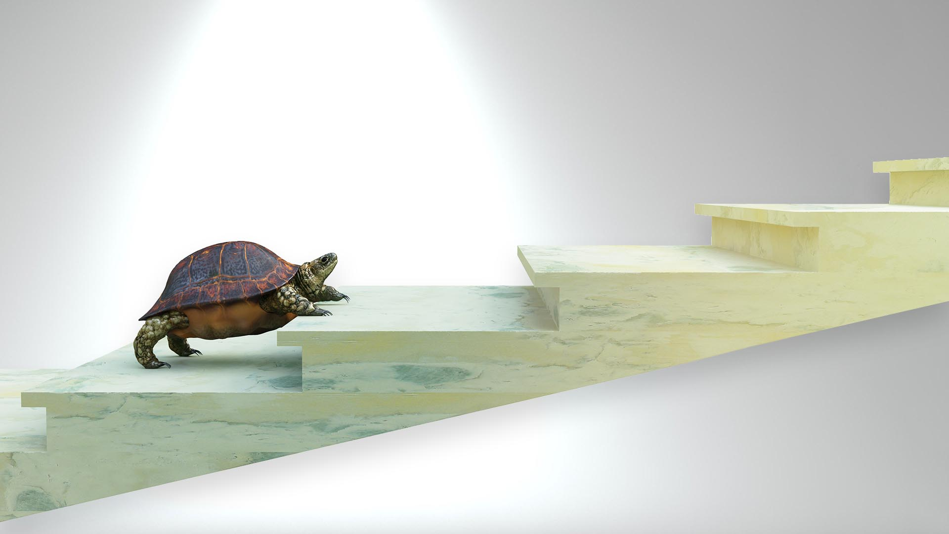 turtle climbing long stairway, representing how moving forward in legal questions can be tough